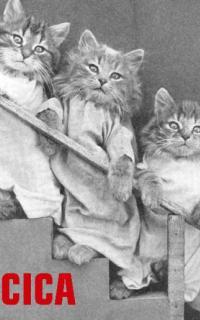 Csorba Győző: Négy kicsi cica : Képes mese gyermekek részére